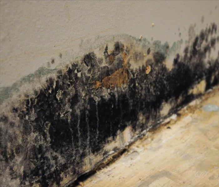 Mold Remediation Mold Myths and Facts